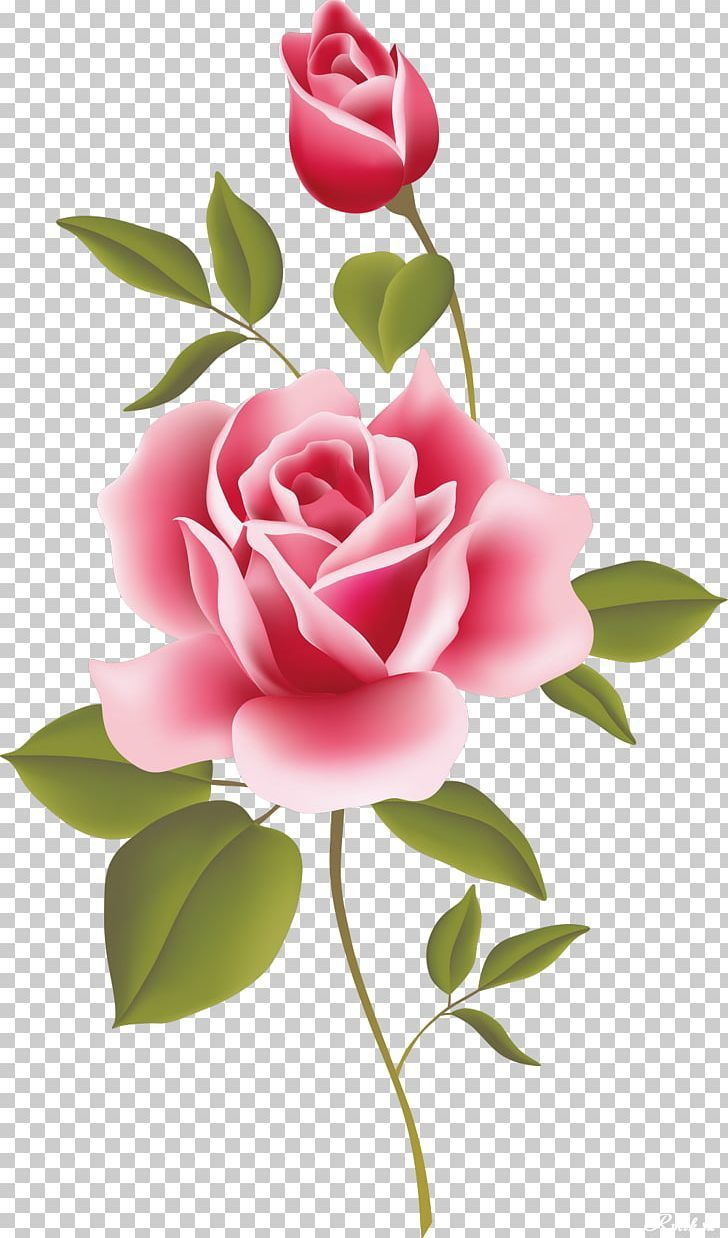 Vintage Roses Beautiful Varieties For Home And Garden Png Artificial Flower Black Rose Bud Camellia Copyright Vintage Roses Rose Painting Flower Drawing