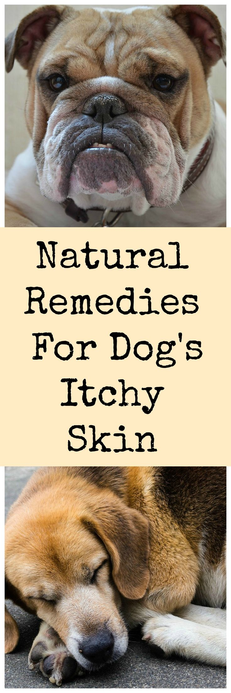 Tomlyn Natural Pet Pharmaceuticals Skin Itch Homeopathic Cat Supplement