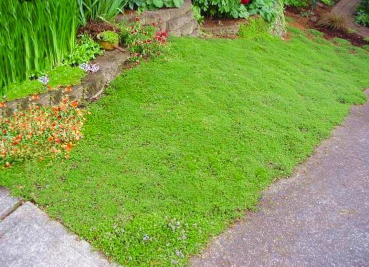 1000 images about mom 39 s hill of weeds on pinterest for Low maintenance ground cover ideas
