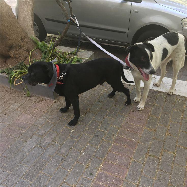 Mushi with his mate Luke