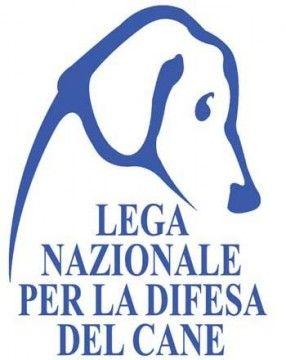 Pescara: il canile ancora in grosse difficoltà a causa del freddo e delle piogge