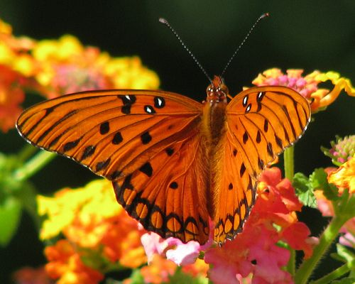 30 Gorgeous Photos of Butterflies