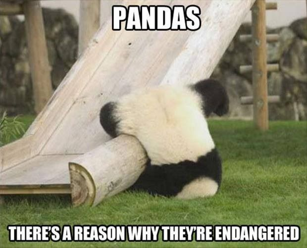 Panda joke. Animal humor. Endangered species joke. Clean joke. Playground humor. ------- Awwwwwww. Poor baby. :(