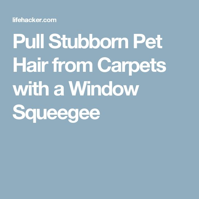 Pull Stubborn Pet Hair from Carpets with a Window Squeegee