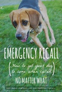 Emergency Recall Training | How To Get Your Dog to Come When Called (No Matter What)