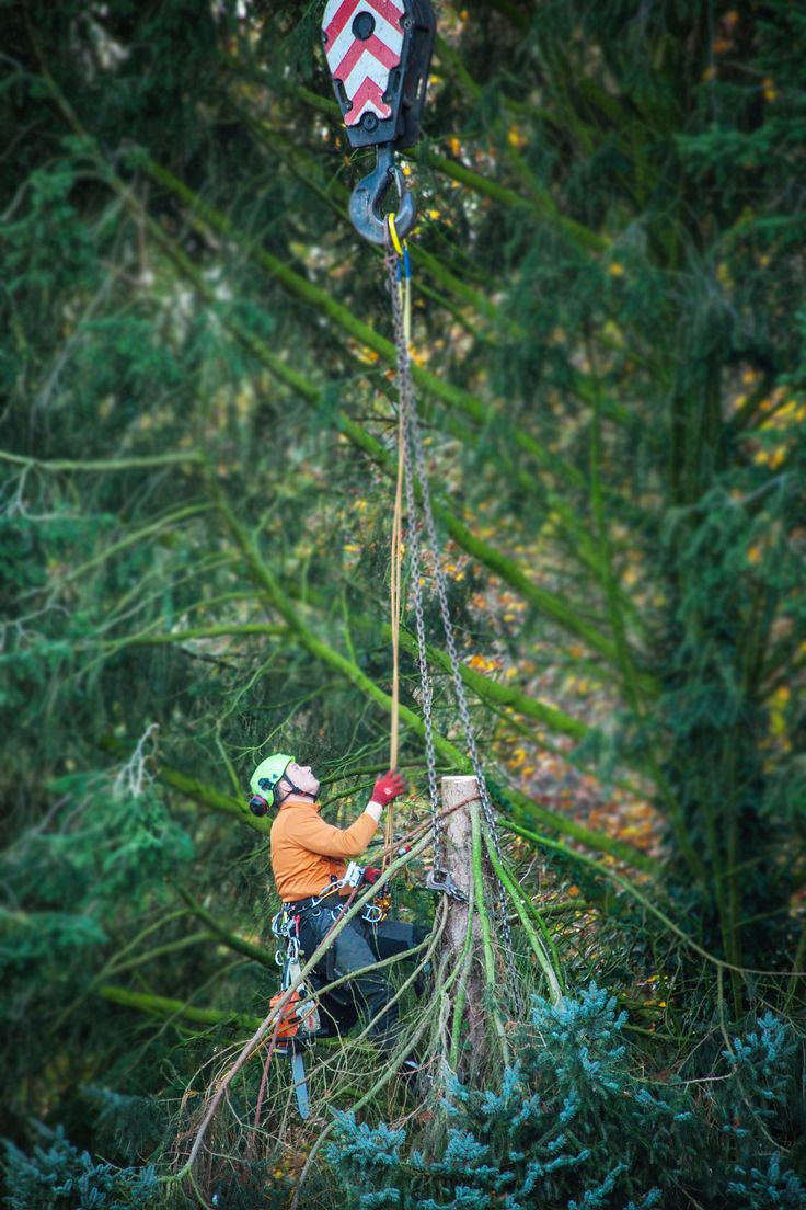 Affordable Tree Services That Answers All Tree Demand! Contact us today, dial +61414627627.