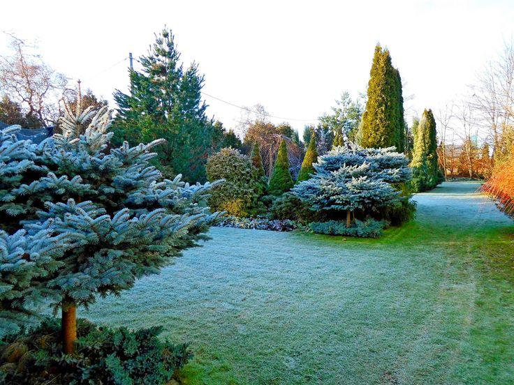 Zima w ogrodzie.Ogrody Kielce.