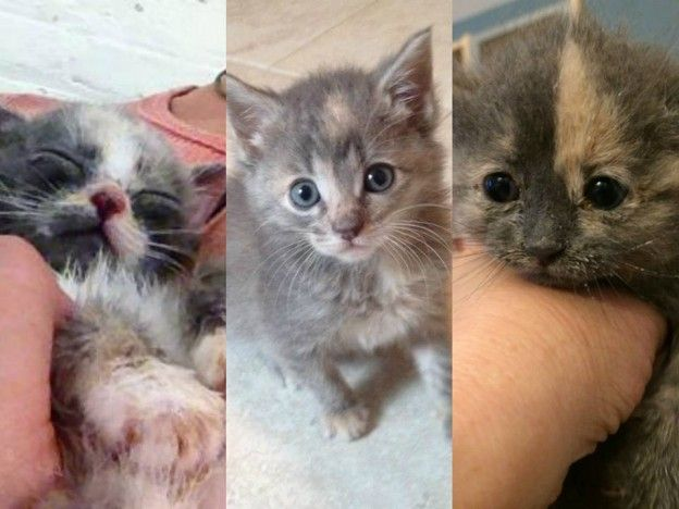 Why you should think twice before you adopt a kitten