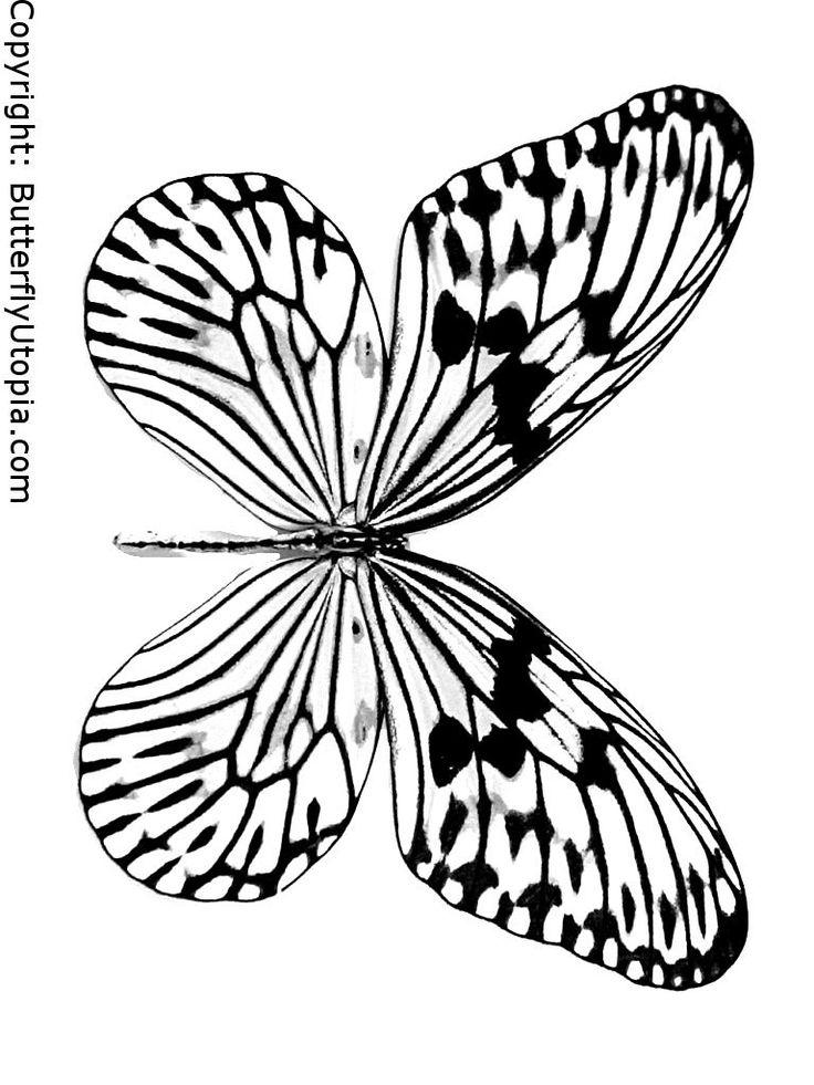 butterfly coloring picture