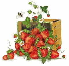 150-strawberries.jpg (240×230)