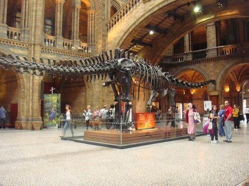 National History Museum, London.