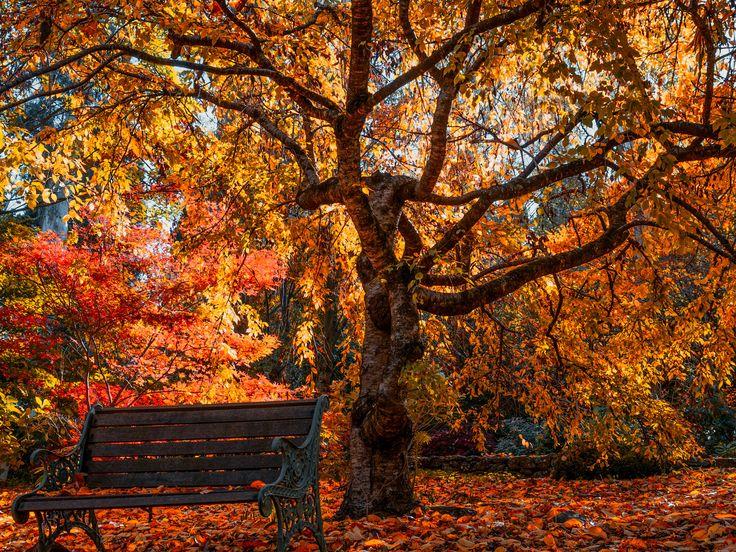 Mount Wilson Garden, Blue Mountains NSW Australia by Travis Chau on 500px