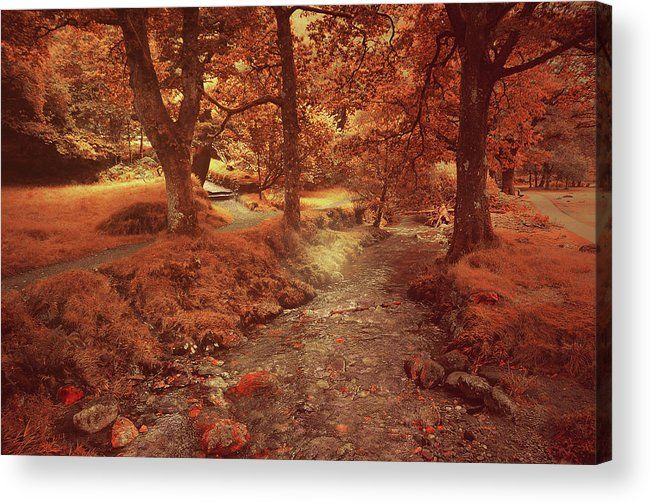 Glendalough Stream. Ireland. Golden Series Fairyland Acrylic Print by Jenny Rainbow.  All acrylic prints are professionally printed, packaged, and shipped within 3 - 4 business days and delivered ready-to-hang on your wall. Choose from multiple sizes and mounting options.