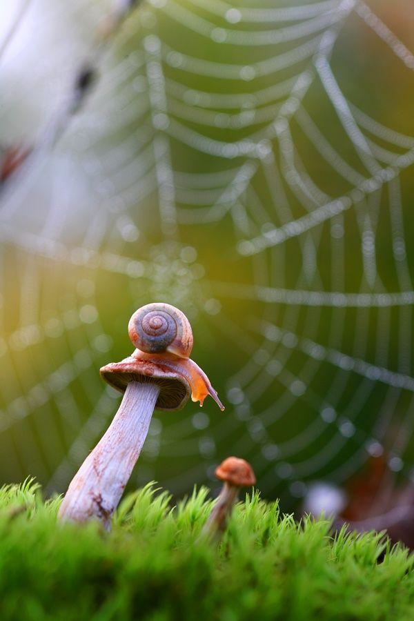Awesome Bokeh Photography! sapphire1707: | by vadimtrunov | http://ift.tt/1thKeMt #webs #bokeh #photography