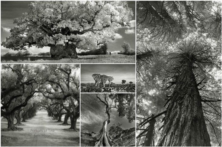 Beth Moon – 'Portraits of Time'