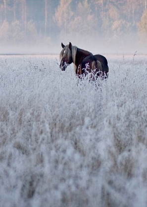 Winter Mist- I can't explain the framed horse picture design the way I see it in my head. Definitely all me.