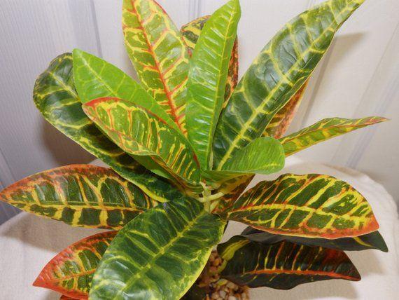 Silk Plant (Or Silk Plants)