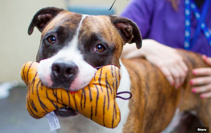 It's been a year since we held the Perfect Exposure Project at Animal Care and Control NYC, during which we equipped shelter staff with the tools and knowledge they needed to take photos that grab adopters.