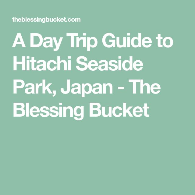 A Day Trip Guide to Hitachi Seaside Park, Japan - The Blessing Bucket
