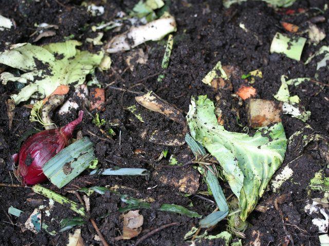 Etaler ses d�chets organiques sur le sol du potager ? Oui ! C'est le compostage…