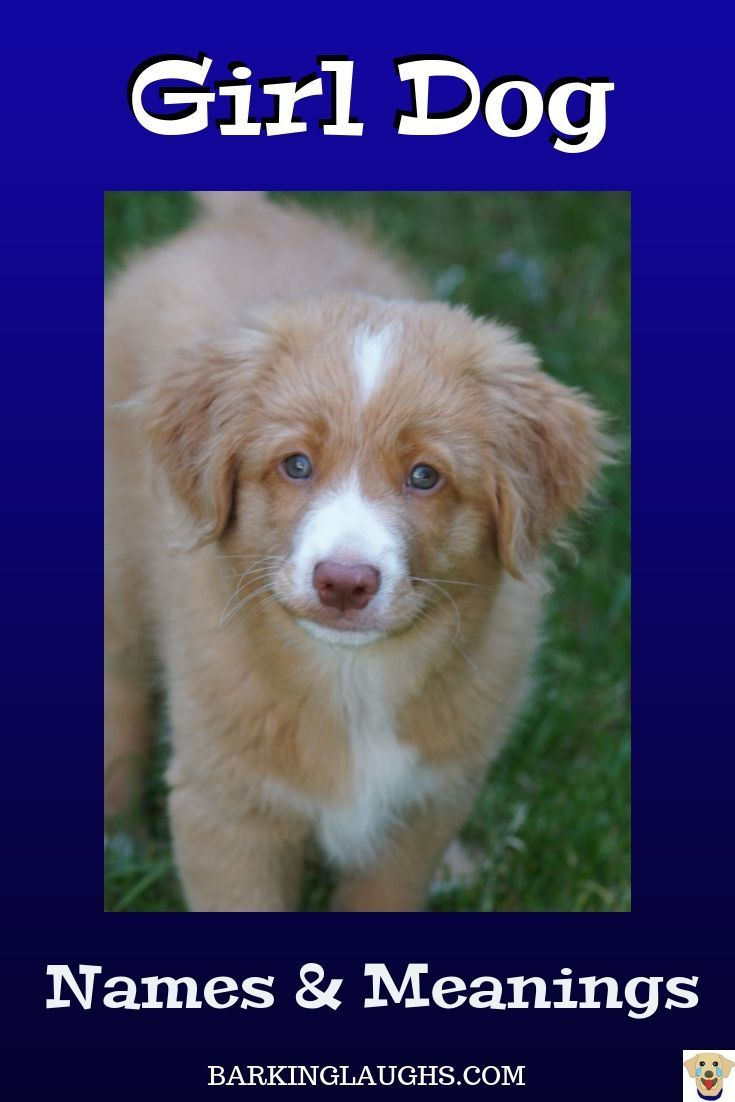 Little Puppy With Awesome Eyes Girl Dog Names And Meanings