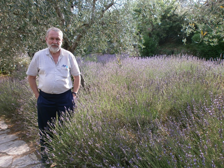 Tor standing besides a small lavender garden in the Plan de Grasse. Lavender grows ideally at much higher altitudes.