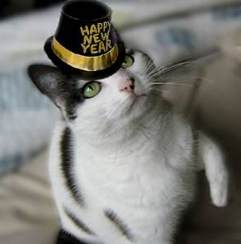 Sweet New Year's Kitty  For more New Years cats, visit https://www.facebook.com/funholidaycats