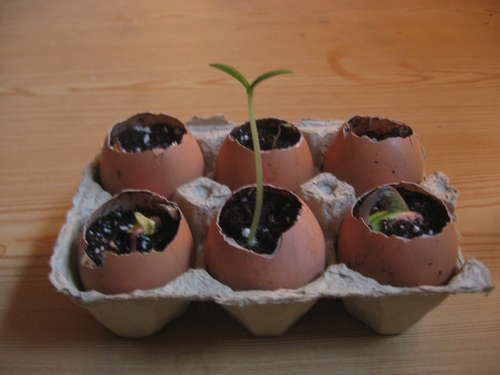 Egg shell seed starters  why didn't I think of that...