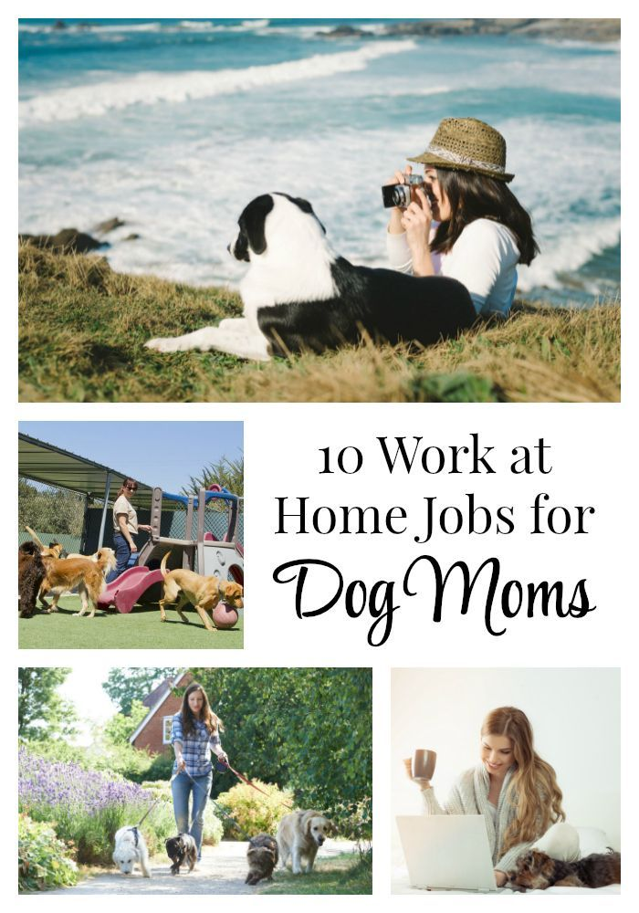 10 Work At Home Jobs For Dog Moms Dog Mom Work From Home Jobs Working From Home