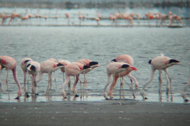 Flamencos en la Reserva Provincial Parque Luro, La Pampa. Más info en www.facebook.com/viajaportupais