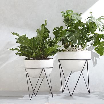 West Elm - Iris Planter + Chevron Stand (Outdoor Planters to get some green even with the slate backyard)
