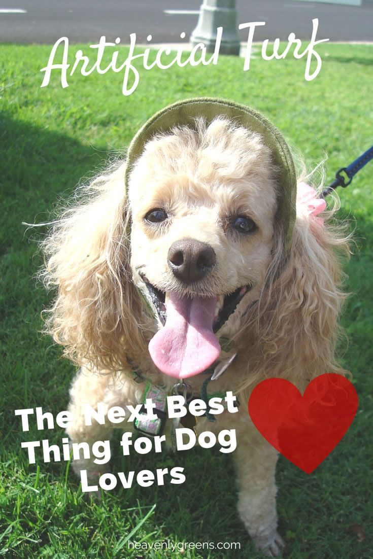 24 best pet friendly synthetic grass by heavenly greens images on
