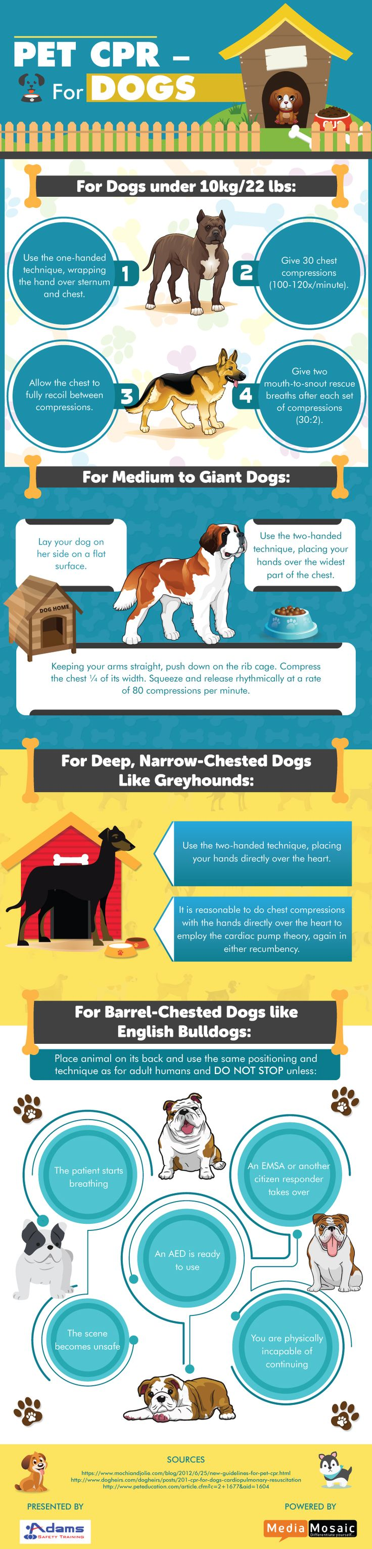 """CPR or Cardiopulmonary Resuscitation is a combination of chest compression and artificial respiration. The infographic titled, """"Pet CPR for Dogs"""" describes the important steps to perform CPR for dogs.   Visit more at: https://www.adamssafety.com/how-to-perform-cpr-for-dogs-infographic/"""