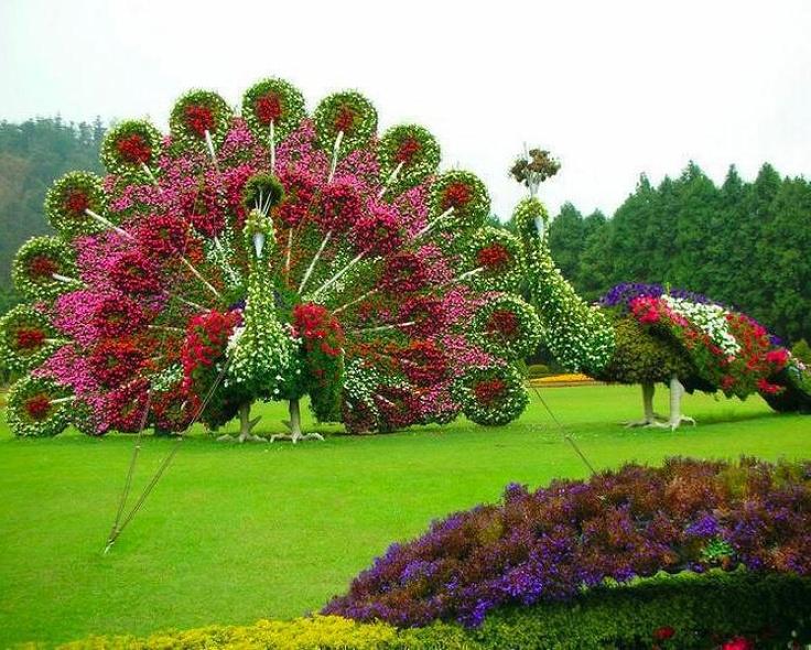 peacock flower topiary