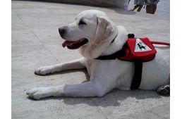 Mancs a kézben nyaraltunk - Lili a Balatonon, avagy hogyan nyaral egy vakvezető kutya?   #kutya #dog  #hírek   #vakvezető #guidedog  #nyaralás #holiday   #balaton   #kutyabaráthelyek