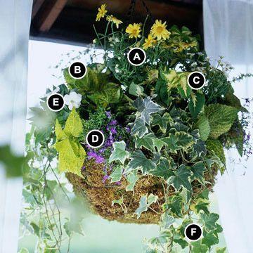 A: Marguerite daisy (Argyranthemum 'Butterfly') -- 1  B: Coleus (Solenostemon 'Rebel Rouser') --1  C: Coleus (Solenostemon) 'Versa Green Halo' -- 1  D: Lobelia erinus 'Compact Royal Jewels' -- 1  E: New Guinea impatiens (Impatiens 'Infinity White') -- 1  F: English ivy (Hedera helix 'Glacier') -- 2