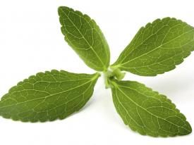 PureCircle Stevia Cuts 500 Billion Calories Globally in 2013   Nutritional Outlook