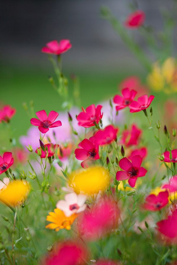 Flower field - this is one of the most gorgeous flower photos I've seen!! WOW