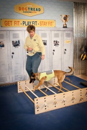 How to Develop a Quality Dog Exercise Program