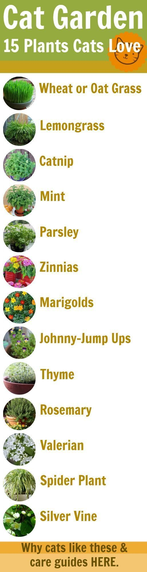 Cat Garden Guide: 15 Feline-Safe Plants Cats Love - Why they like them and grow guides for each.
