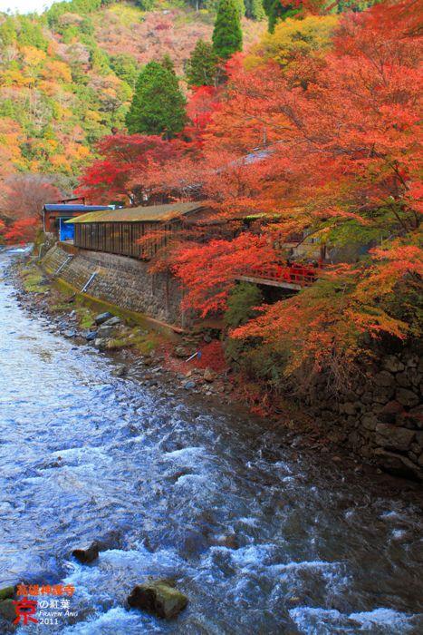 ✮ Takao Jingoji Temple, Kyoto, Japan
