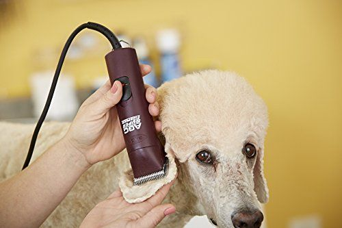 2015 Top 5 Best Professional Dog Clippers - Top Dog Tips