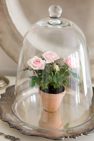 Rose under glass to keep 39 storytelling 39 alive maybe have for Rose under glass