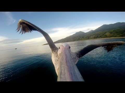 Glad he came back so we could enjoy the footage. | This Amazing Video Of A Pelican Learning To Fly Will Make You Feel Alive