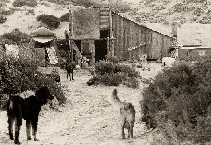 Dogs at Cactus, 1975, by John Witzig