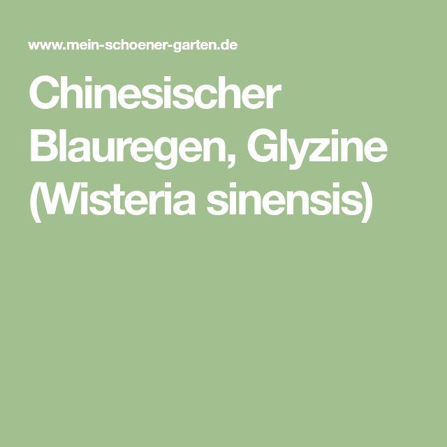 Die besten 25+ Wisteria sinensis Ideen auf Pinterest Blauregen