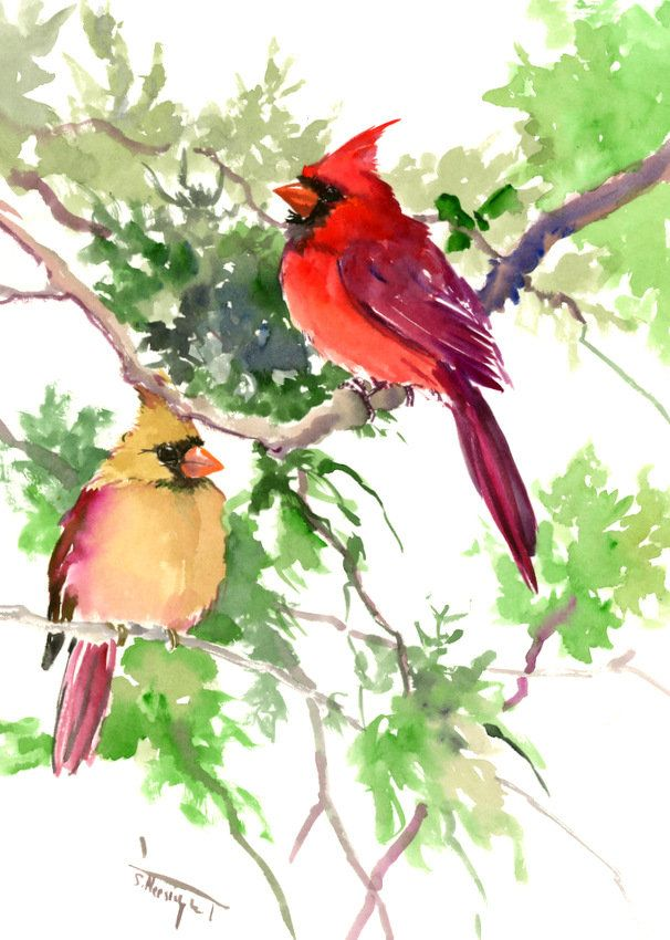 Cardinal Bird Artwork Original One Of A Kind Watercolor Painting