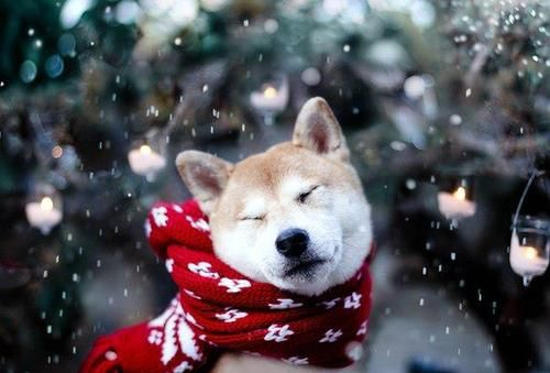 such snow                             very christmas  wow