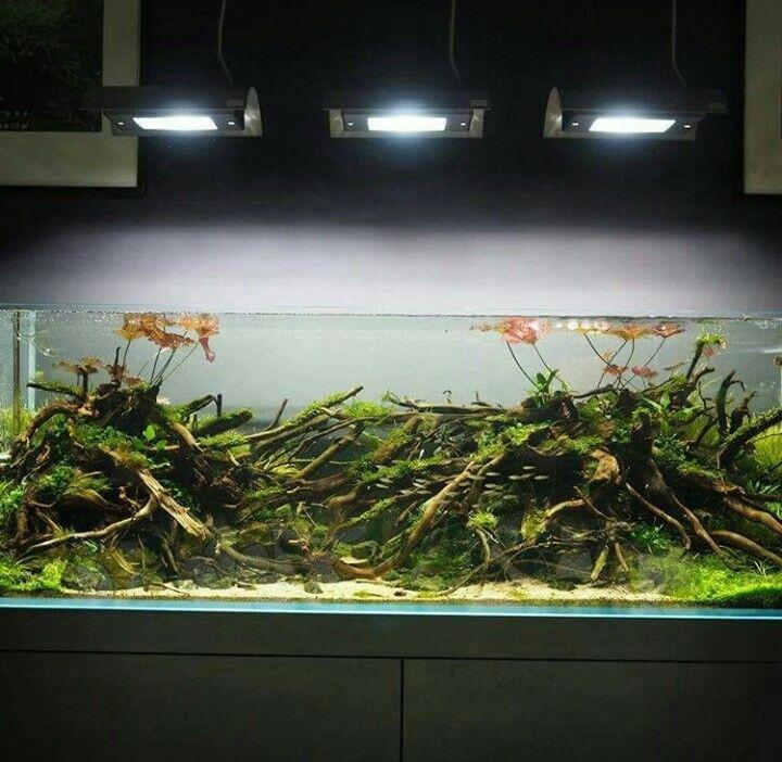 123 best Aquarium images on Pinterest Aquascaping Aquarium