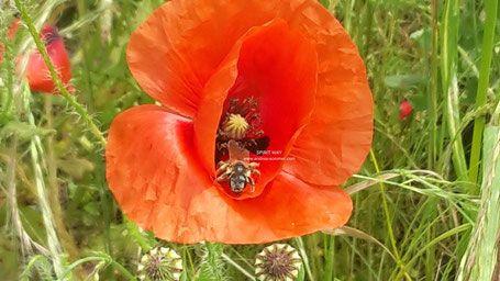 SCHAMANISMUS - Krafttier Biene - Spirituelle Ausbildungen und Coaching Astrologieschule Kartenschule